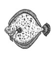 european plaice fish animal engraving vector image vector image