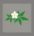 flat shading style icon flower anemone vector image
