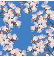 cherry flowers vector image