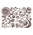 hand drawn nuts collection vector image vector image