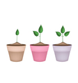 Three Green Trees in Terracotta Flower Pots vector image vector image