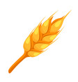 wheat spike icon vector image