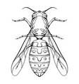 contour sketch a wasp with a top view on a vector image vector image