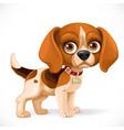 cute cartoon lop-eared beagle little puppy vector image vector image