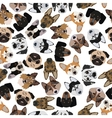 flat seamless pattern pedigree dogs vector image vector image