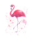 watercolor pink flamingo vector image