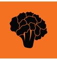 Cauliflower icon vector image