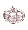 hand drawn pumpkin detailed organic product vector image