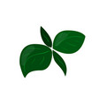 herb green leaves icon healthy eating cartoon vector image vector image