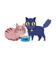 pet shop black and striped cats with fish can vector image vector image