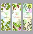 herbal tea collection linden five-flavor berry vector image vector image