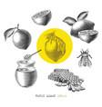 honey lemon elememt hand drawn vintage engraving vector image