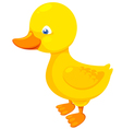Little duck vector image