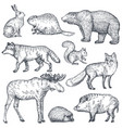 set of hand drawn animals of europe vector image