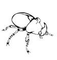 sketch beetle vector image vector image