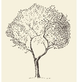 Young olive tree hand drawn vector image