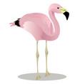 andean flamingo cartoon bird vector image vector image