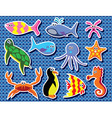 background colorful sea animals vector image