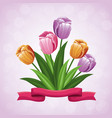 beauty tulips flower ribbon ornament vector image