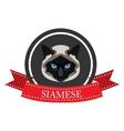 flat icon pedigreed cat siamese vector image vector image