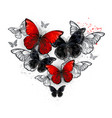 realistic black and red morpho vector image vector image