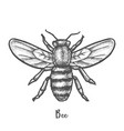 sketch bee or hand drawn wasp insect honeybee vector image