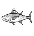 tuna fish in engraving style design element for vector image