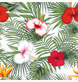 bird paradise multicolor hibiscus green plants vector image vector image