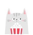 cat popcorn box kitten watching movie cute vector image vector image