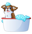 cute dog taking a bath on a white background vector image
