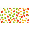 multicolored leaves autumn vector image vector image