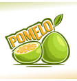 pomelo fruit vector image vector image