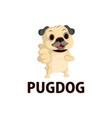 pug dog thump up mascot character logo icon vector image vector image