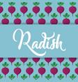 radish vegetable icon vector image
