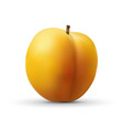 realistic apricot isolated on white background vector image vector image