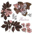 hand drawn flowers in engraved style vector image vector image