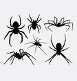 Spider insect animal silhouettes vector image vector image