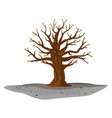 oak tree in spring isolated vector image vector image