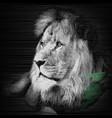 a realistic portrait of a lion vector image vector image