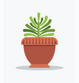 exotic green yucca indoor plant in big clay pot vector image vector image