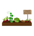 growing vegetables and plants on one bed vector image vector image