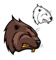 head beaver animal icon angry rodent mascot vector image vector image