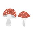 Amanita poisonous mushroom vector image