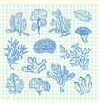hand drawn seaweed set vector image vector image