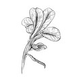 iris flower ink sketch on white background vector image