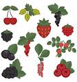 Set of juicy berries vector image