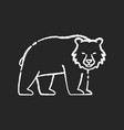 brown bear chalk white icon on black background vector image