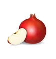 Fresh pomegranate and apple slice vector image vector image
