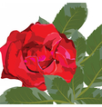 Red rose flower isolated vector image vector image