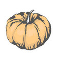 sweet ripe pumpkin isolated sketch vector image